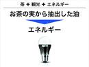 2012_1202yanagi_2.jpg
